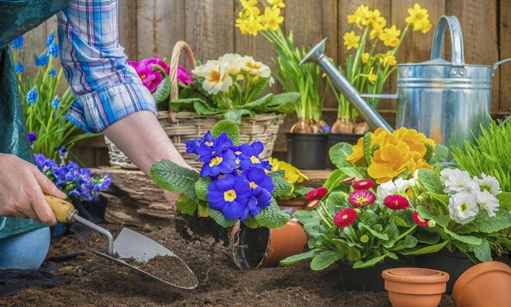 موسم سرما میں باغبانی