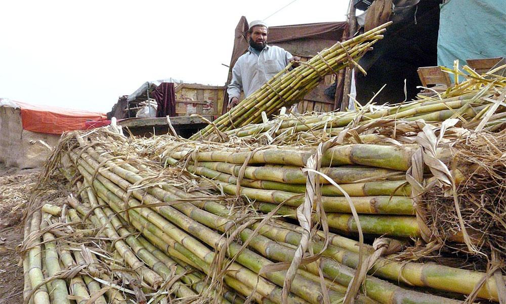 پنجاب: کرشنگ نہ کرنیوالی شوگر ملوں کیخلاف کاروائی کا فیصلہ