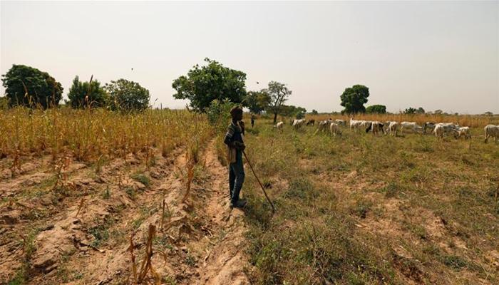 مالی میں نسلی فسادات، 37 افراد ہلاک