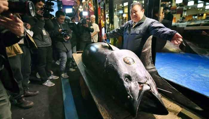 278کلو وزنی ٹیونا مچھلی 3ملین ڈالر میں فروخت