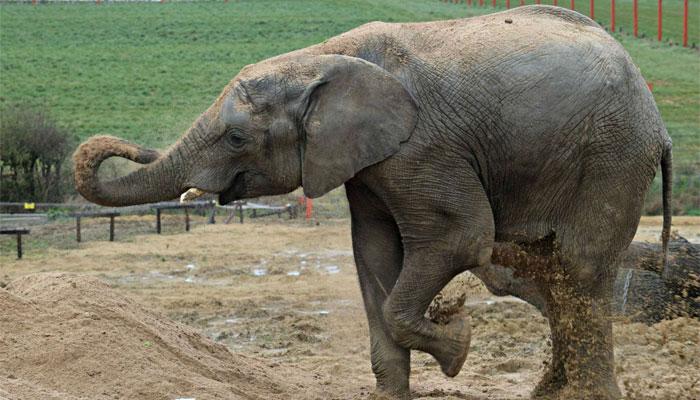 تھائی لینڈ میں ہاتھی کے غصے سے لوگ خوفزدہ