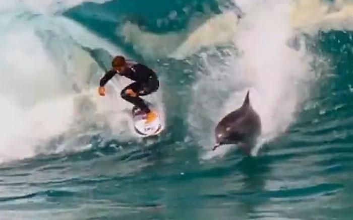 کیلیفورنیا :نوجوان کی ڈولفنز کے ساتھ سرفنگ