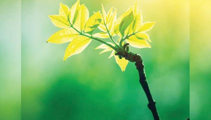 ضیائی تالیف کے عمل میں تبدیلی سے زرعی پیداوار میں اضافہ