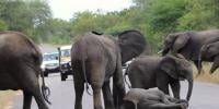 Group Of Elephants Blocks Road In India