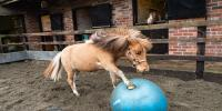 Tony The Pony Becomes Fantastic Footballer Uk