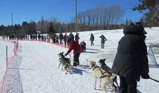 15th Annual Sled Dog Race