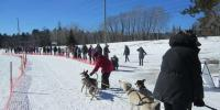 15th Annual Sled Dog Race