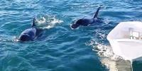 Pod Of Whale Swims Up To Boaters In New Zealand