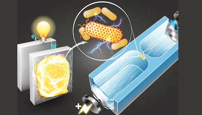 بیکٹیریا سے بجلی  بنانے والی بیٹری