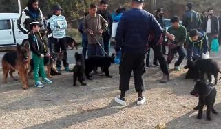 Dog Show In Islamabad