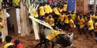 India Jallikattu Event In Tamil Nadu Two Killed