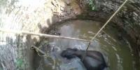Elephant Rescued From 35 Foot Deep Well After 4 Hr Struggle India