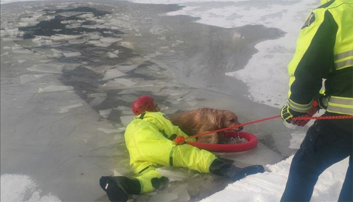 سخت سردی سے انسان ہی نہیں جانوربھی مشکل میں