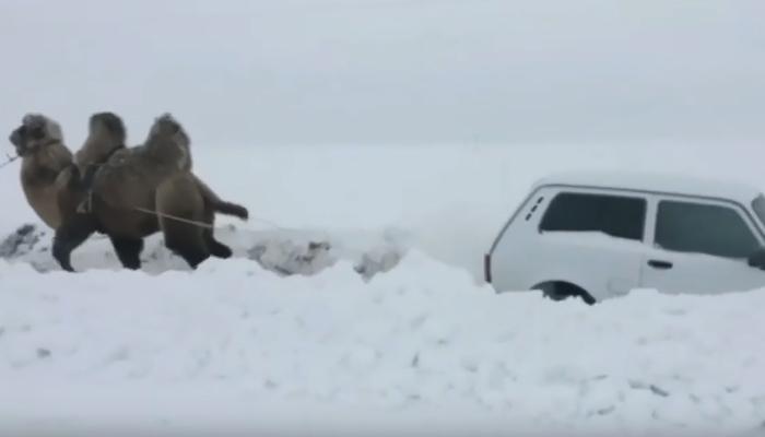 برف میں پھنسی گاڑی کو نکالنے کیلئےکس کی مدد لی گئی؟
