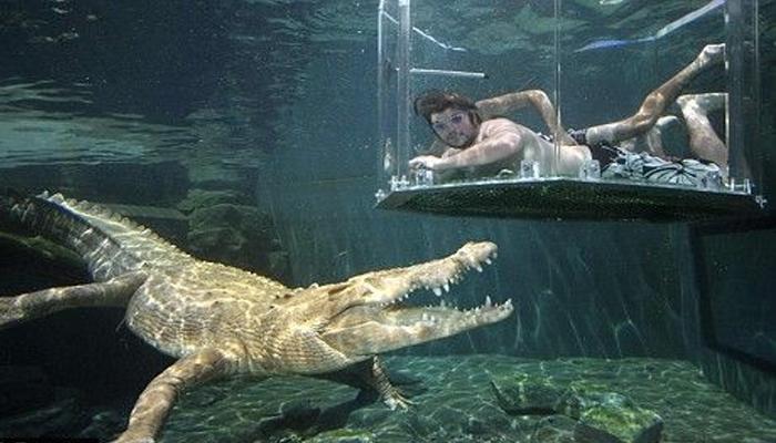 خطر ناک مگر مچھوں کے سا تھ تیراکی