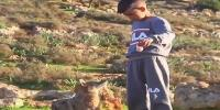 Wolf Befriends Libyan Boy And Looks After His Sheep