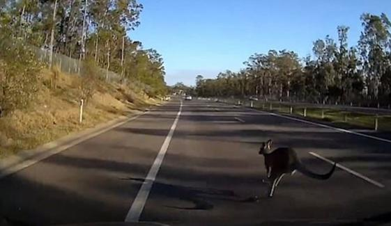 Driver Slams Into Kangaroo Before Being Rear Ended Australia