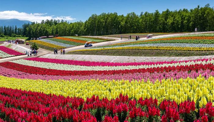 چین میں پھول فیئری لینڈکا منظر پیش کرنے لگے