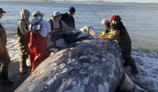 Dead Philippines Whale Had 40kg Of Plastic In Stomach