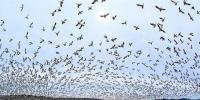 Hundreds Of Snow Geese Fly Over Central Pennsylvania