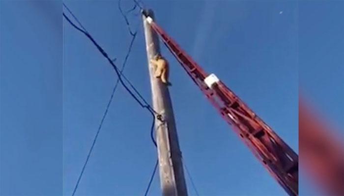 امریکا: بلی کا ریسکیو اہلکاروں کی مدد لینے سے انکار