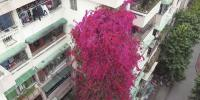 Flower Waterfall Commemorates Memory Of Father China