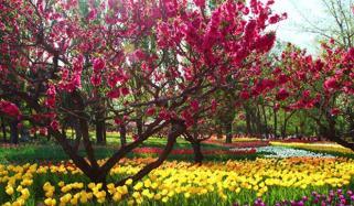 Spring Blossoms Bloom In Beijing