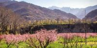 The Beauty Of Spring In Swat