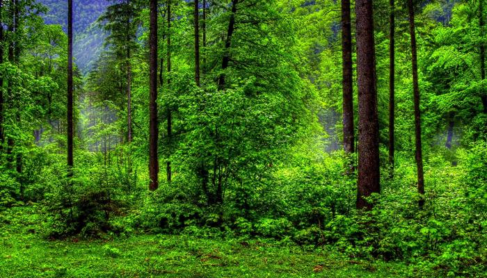دنیا بھر میں آج جنگلات کے تحفظ کا دن