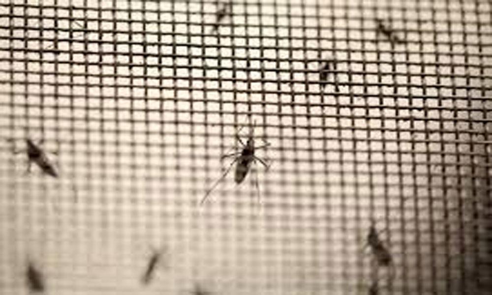 فیصل آباد کے عوا م مچھروں کے رحم وکرم پر