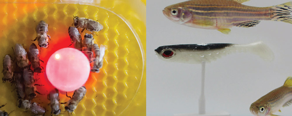 گفتگو کرانے والے روبوٹ کا مکھیوں اور مچھلیوں کے مابین کام یاب تجربہ