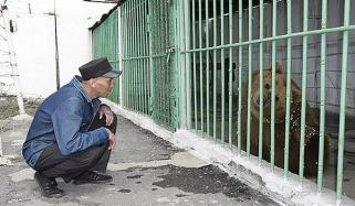 The Bear Serving Life In Jail