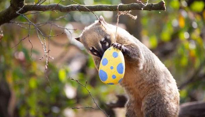 لندن ،چڑیا گھر میں ایسٹر کی خوشیاں