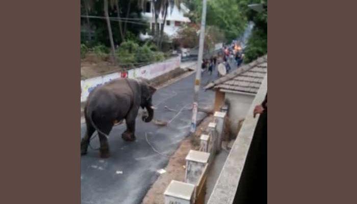 بھارت میں ہاتھی کی دادا گیری