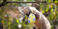 London Zoo Gives Animals Multi Coloured Treats For Easter