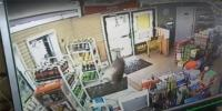 South Georgia Deer Smashes Its Way Into Convenience Store