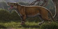 Giant Lion Fossils Discovered In Museum Drawer