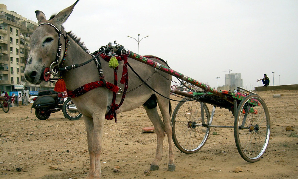 ''گدھا گاڑی'' سندھ کی قدیم ثقافت کی پہچان