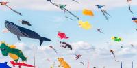 Adelaide International Kite Festival Sunday 21st April 2019