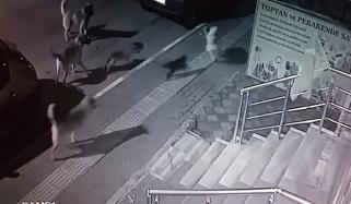 Brave Cat Takes On A Pack Of 6 Dogs