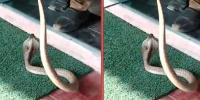 Snake Found Inside An Atm In Coimbatore Later Rescued