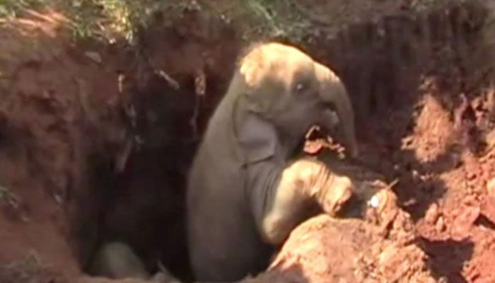 سری لنکن:گڑھے میں پھنسے دو ننھے ہاتھیوں کو نکال لیا گیا