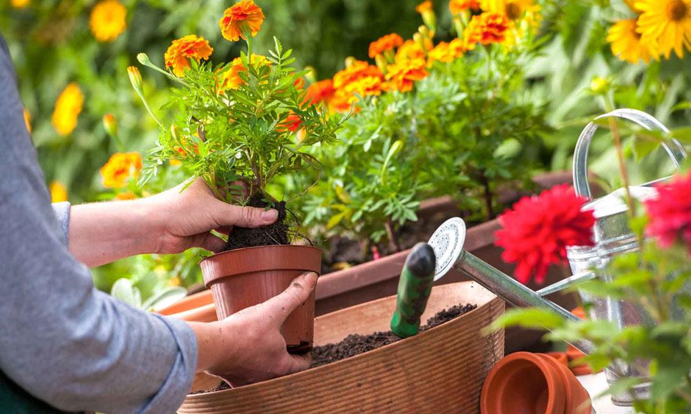 گرمیوں میں ٹھنڈک کیلئے گھر میں باغبانی کریں