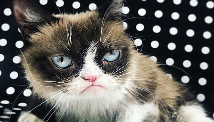 امریکا: دنیا کی سب سے بدمزاج بلی چل بسی
