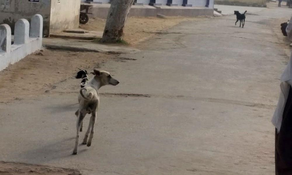 سندھ6 ماہ میں 1 لاکھ افراد سگ گزیدگی کا شکار
