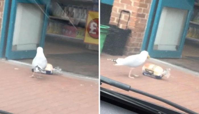 برطانیہ کے اسٹور میں پرندہ چوری کرتے پکڑا گیا!!