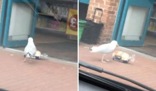 Seagull Steals Bread From Shop