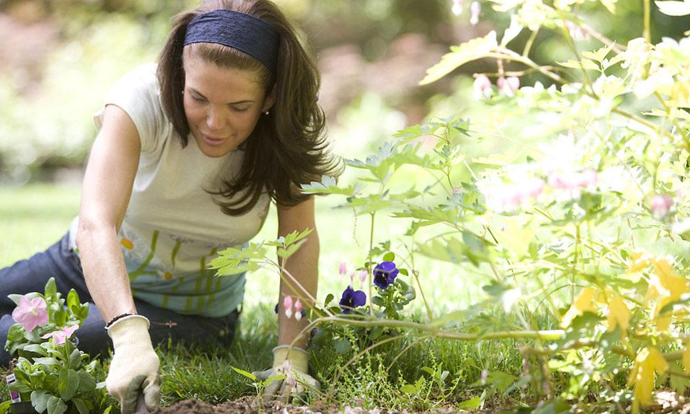 موسمِ گرما میں باغبانی کیلئے مفید مشورے