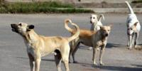 Eleventh Death Due To Rabies Shortage Of Vaccines