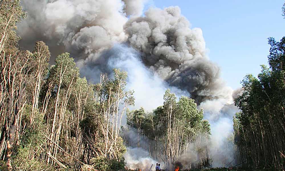 فلوریڈا : آسمانی بجلی گرنے سے آگ لگ گئی